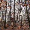 UmweltaktivistInnen protestieren im Dannenroeder Forst gegen den Ausbau der A49 fuer den ein Teil des Waldes gerodet werden muss:    Array